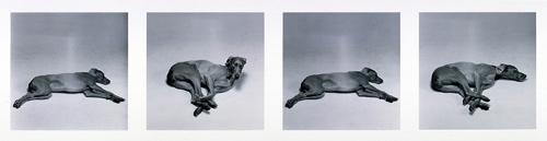 Untitled (Gallop), William Wegman, 1988